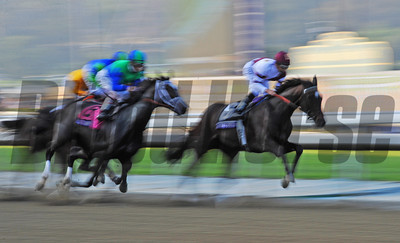 Start of the Breeders Cup Ladies Classic... Royal Delta has the lead... © 2012 Rick Samuels/The Blood-Horse