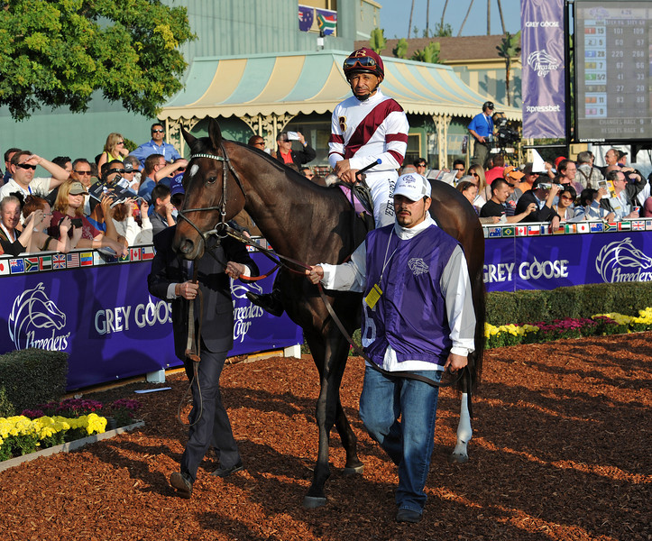 Royal Delta in the Santa Anita paddock...