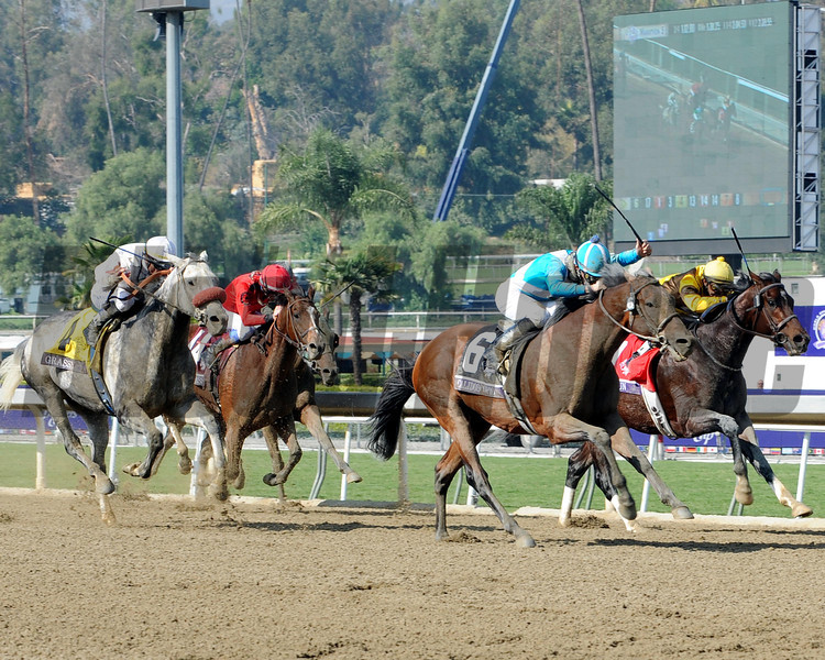 Calidoscopio wins the 2012 the Breeders' Cup Marathon. <br /> Photo by Dave Harmon