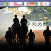 Caption: horses going to the paddock<br /> Breeders' Cup morning works at Santa Anita near Arcadia, California, on Oct. 31, 2012.<br /> BCRACES2012 WorksThurs2 image79<br /> Photo by Anne M. Eberhardt