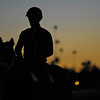 Caption: Scene: sunrise with horse on track, palm trees in background<br /> Breeders' Cup morning works at Santa Anita near Arcadia, California, on Oct. 28, 2012.<br /> BCRACES2012 WorksSunday2 image485<br /> Photo by Anne M. Eberhardt