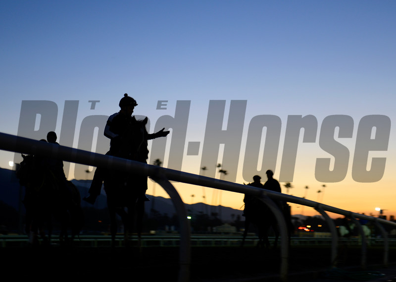 Caption: morning work scene<br /> Breeders' Cup morning works at Santa Anita near Arcadia, California, on Oct. 30, 2012.<br /> BCRACES2012 WorksTues1 image448<br /> Photo by Anne M. Eberhardt