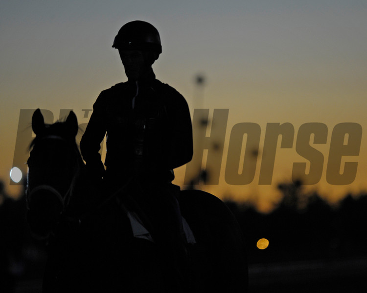 Caption: Scene: sunrise with horse on track, palm trees in background<br /> Breeders' Cup morning works at Santa Anita near Arcadia, California, on Oct. 28, 2012.<br /> BCRACES2012 WorksSunday2 image485<br /> Photo by Anne M. Eberhardt.