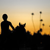 Caption: Scene: sunrise with horse on track, palm trees in background<br /> Breeders' Cup morning works at Santa Anita near Arcadia, California, on Oct. 28, 2012.<br /> BCRACES2012 WorksSunday2 image490<br /> Photo by Anne M. Eberhardt
