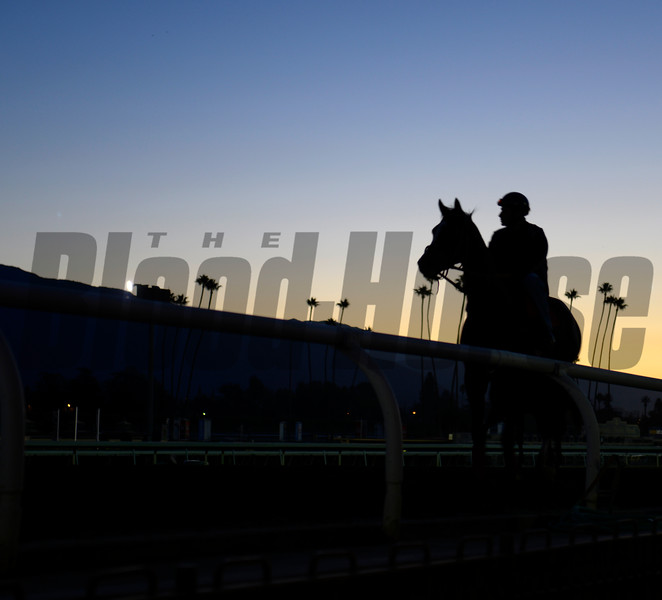 Caption: morning scene<br /> Breeders' Cup morning works at Santa Anita near Arcadia, California, on Oct. 30, 2012.<br /> BCRACES2012 WorksTues1 image453<br /> Photo by Anne M. Eberhardt