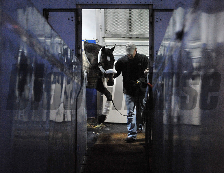 Grace Hall, stranded by Hurricane Sandy, is the first horse to load the Tex Sutton plane Wednesday morning, heading to California for the Breeders Cup...<br /> © 2012 Rick Samuels/ The Blood-Horse