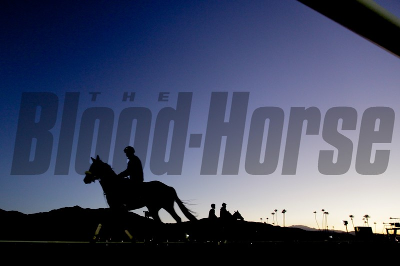 Horses worked out at Santa Anita Park in Arcadia, California, the week before the Breeders' Cup.