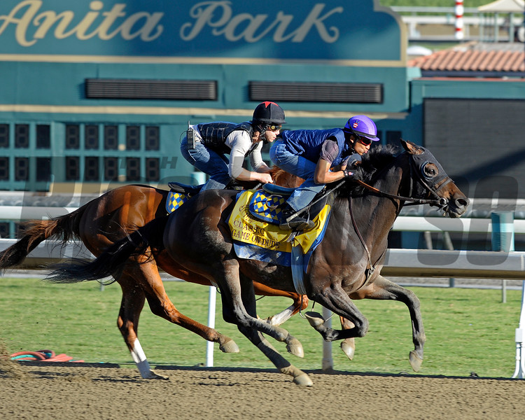 Caption: Game On Dude works<br /> Breeders' Cup morning works at Santa Anita near Arcadia, California, on Oct. 28, 2012.<br /> BCRACES2012 WorksSunday2 image930<br /> Photo by Anne M. Eberhardt.