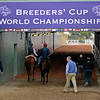 Caption: tunnel scene as BC horse leaves the track<br /> Breeders' Cup morning works at Santa Anita near Arcadia, California, on Oct. 31, 2012.<br /> BCRACES2012 WorksThurs1 image679<br /> Photo by Anne M. Eberhardt
