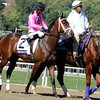 Delegation came in 3rd place in the 2012 Breeders' Cup Dirt Mile at Santa Anita Park