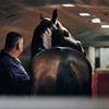 Trying to get out of town before Hurricane Sandy strikes New York...<br /> Strike The Moon, on the early morning Tex Sutton charter flight from Newburgh, NY to California and The Breeders' Cup<br />  © 2012 Rick Samuels/The Blood-Horse