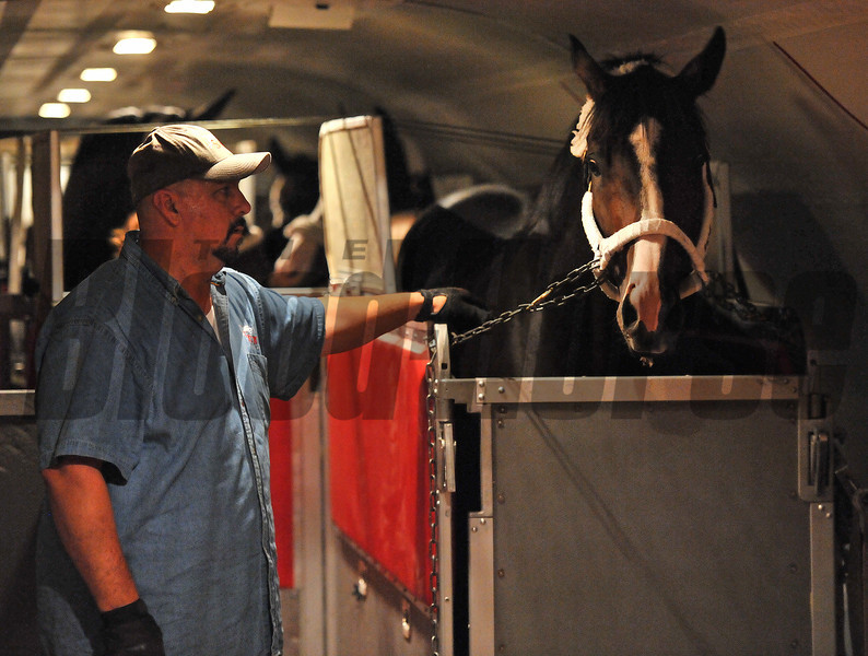 Trying to get out of town before Hurricane Sandy strikes New York...<br /> Jockey Club Gold Cup winner Flat Out, settles in for a 3:30am flight Monday morning.<br /> © 2012 Rick Samuels/The Blood-Horse