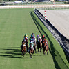 The field for the Breeders' Cup Turf Backstretch come down the backstretch at Santa Anita Park on November 3, 2012.<br /> Photo by Chad Harmon