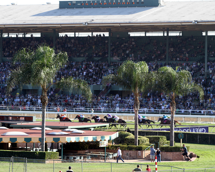 Little Mike leads the field through the stretch of the Breeders' Cup Turf at Santa Anita Park on November 3, 2012.<br /> Photo by Chad Harmon