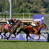 Caption: Little Mike with Ramon Dominguez wins the Turf with Point of Entry and John Velazquez in second.<br /> Breeders' Cup races at Santa Anita near Arcadia, California, on Nov. 3, 2012.<br /> BCRACES2012      Turf  image238<br /> Photo by Anne M. Eberhardt