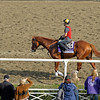 Caption: Shackleford<br /> Breeders' Cup morning works at Santa Anita near Arcadia, California, on Oct. 31, 2012.<br /> BCRACES2012 WorksThurs3 image375<br /> Photo by Anne M. Eberhardt