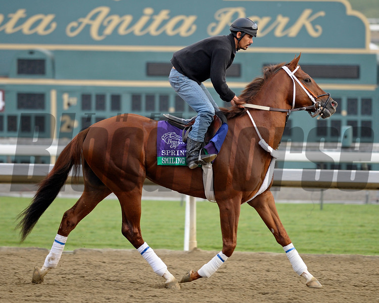 Caption: Smiling Tiger<br /> Breeders' Cup morning works at Santa Anita near Arcadia, California, on Oct. 31, 2012.<br /> BCRACES2012 WorksThurs2 image214<br /> Photo by Anne M. Eberhardt
