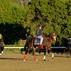 Caption: Trinniberg<br /> Breeders' Cup morning works at Santa Anita near Arcadia, California, on Oct. 30, 2012.<br /> BCRACES2012 WorksTues3 image925<br /> Photo by Anne M. Eberhardt