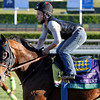 Caption: Capital Account, Sprint<br /> Breeders' Cup morning works at Santa Anita near Arcadia, California, on Oct. 28, 2012.<br /> BCRACES2012 WorksSunday2 image811<br /> Photo by Anne M. Eberhardt