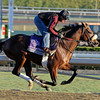 Caption: Quail Hill<br /> Breeders' Cup morning works at Santa Anita near Arcadia, California, on Oct. 29, 2012.<br /> BCRACES2012 WorksMonday1 image279<br /> Photo by Anne M. Eberhardt