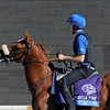 Caption: Artigiano<br /> Breeders' Cup morning works at Santa Anita near Arcadia, California, on Oct. 29, 2012.<br /> BCRACES2012 WorksMonday1 image663<br /> Photo by Anne M. Eberhardt