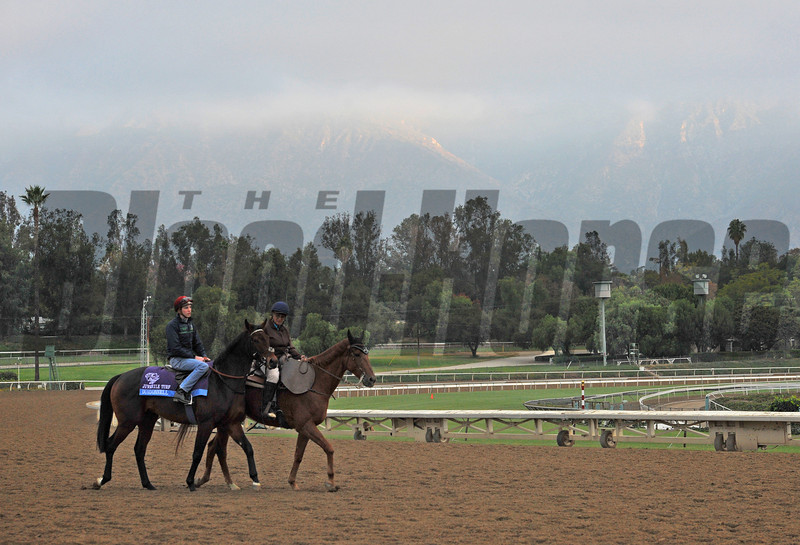 Breeders Cup Friday morning...<br /> Juvenile Turf favorite Dundonnell.