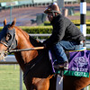 Caption: Coil<br /> Breeders' Cup morning works at Santa Anita near Arcadia, California, on Oct. 28, 2012.<br /> BCRACES2012 WorksSunday2 image814<br /> Photo by Anne M. Eberhardt