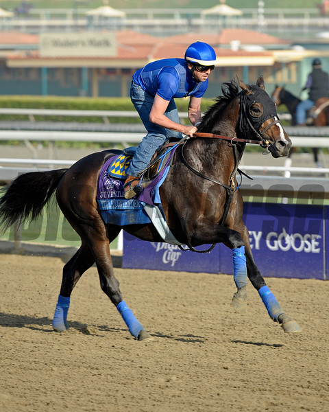 Caption: Title Contender<br /> Breeders' Cup morning works at Santa Anita near Arcadia, California, on Oct. 31, 2012.<br /> BCRACES2012 WorksWed2 image752<br /> Photo by Anne M. Eberhardt