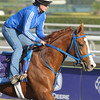Caption: Brown Almighty<br /> Breeders' Cup morning works at Santa Anita near Arcadia, California, on Oct. 31, 2012.<br /> BCRACES2012 WorksWed2 image764<br /> Photo by Anne M. Eberhardt