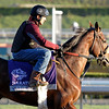 Caption: Quail Hill, Marathon<br /> Breeders' Cup morning works at Santa Anita near Arcadia, California, on Oct. 29, 2012.<br /> BCRACES2012 WorksMonday1 image222<br /> Photo by Anne M. Eberhardt