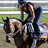 Caption: Upgrade with trainer Michelle Nihei<br /> Breeders' Cup morning works at Santa Anita near Arcadia, California, on Oct. 29, 2012.<br /> BCRACES2012 WorksMonday1 image649<br /> Photo by Anne M. Eberhardt