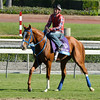 Caption: Brown Almighty with Kent Desormeaux on the turf course<br /> Breeders' Cup morning works at Santa Anita near Arcadia, California, on Oct. 30, 2012.<br /> BCRACES2012 WorksTues4 image304<br /> Photo by Anne M. Eberhardt