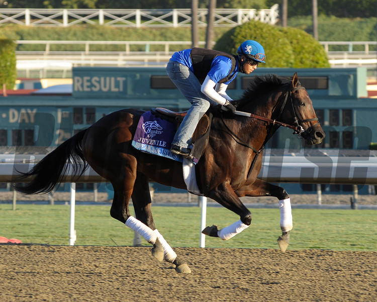 Caption: Speak Logistics<br /> Breeders' Cup morning works at Santa Anita near Arcadia, California, on Oct. 30, 2012.<br /> BCRACES2012 WorksTues3 image963<br /> Photo by Anne M. Eberhardt