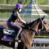 Caption: Summer of Fun<br /> Breeders' Cup morning works at Santa Anita near Arcadia, California, on Oct. 29, 2012.<br /> BCRACES2012 WorksMonday1 image382<br /> Photo by Anne M. Eberhardt