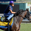 Caption: Game on Dude, Classic<br /> Breeders' Cup morning works at Santa Anita near Arcadia, California, on Oct. 28, 2012.<br /> BCRACES2012 WorksSunday2 image910<br /> Photo by Anne M. Eberhardt