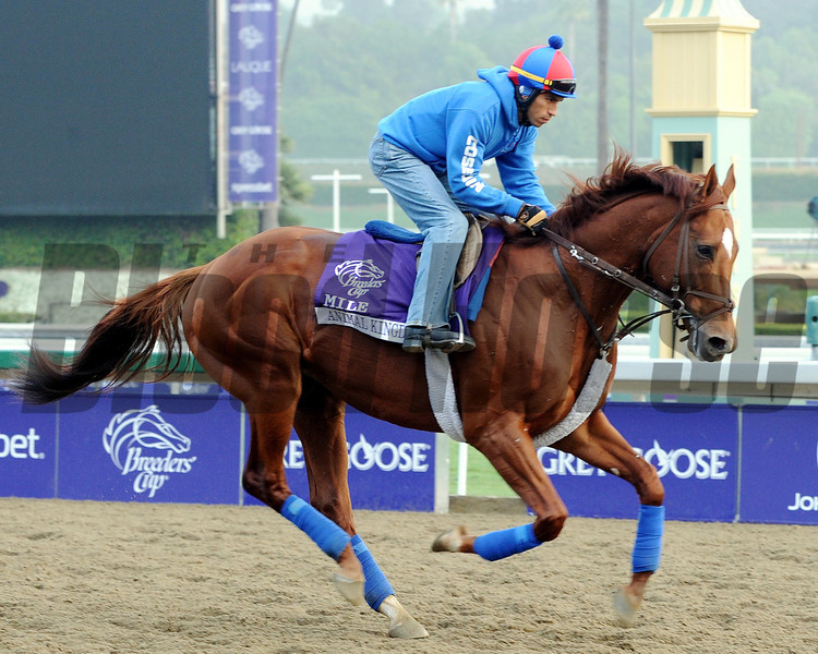 Animal Kingdom<br /> Breeders' Cup<br /> Photo by Dave Harmon