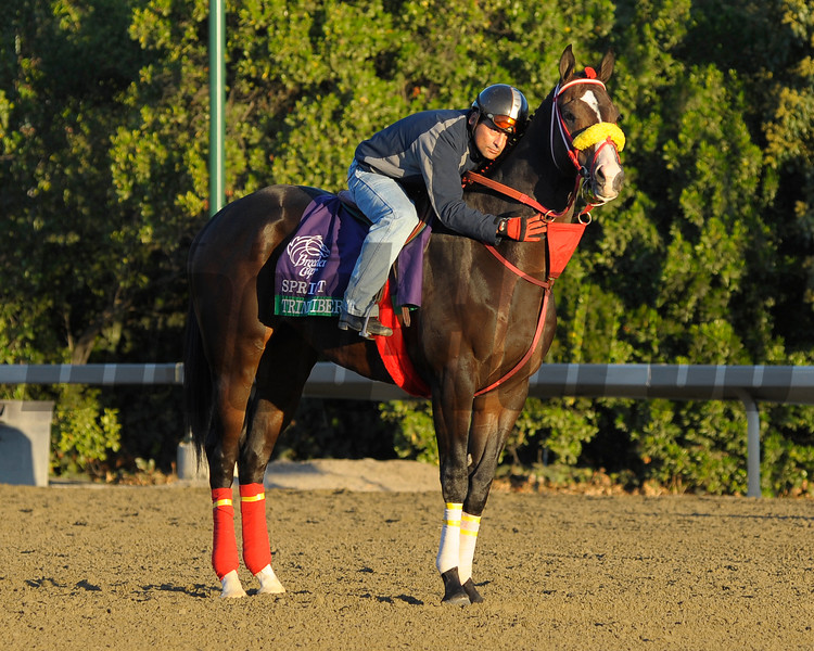 Caption: Trinniberg<br /> Breeders' Cup morning works at Santa Anita near Arcadia, California, on Oct. 30, 2012.<br /> BCRACES2012 WorksTues3 image936<br /> Photo by Anne M. Eberhardt