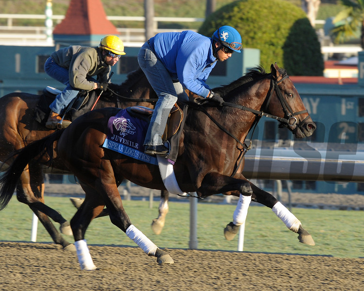 Caption: Speak Logistics<br /> Breeders' Cup morning works at Santa Anita near Arcadia, California, on Oct. 29, 2012.<br /> BCRACES2012 WorksMonday1 image193<br /> Photo by Anne M. Eberhardt