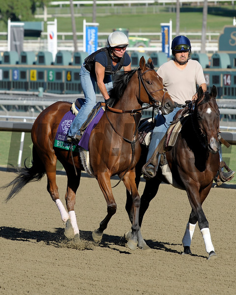 Caption: Rumor<br /> Breeders' Cup morning works at Santa Anita near Arcadia, California, on Oct. 29, 2012.<br /> BCRACES2012 WorksMonday1 image505<br /> Photo by Anne M. Eberhardt