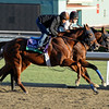 Caption: Coil, outside, and Capital Account<br /> Breeders' Cup morning works at Santa Anita near Arcadia, California, on Oct. 28, 2012.<br /> BCRACES2012 WorksSunday2 image809<br /> Photo by Anne M. Eberhardt