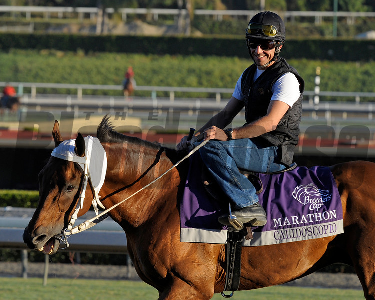 Caption: Calidoscopio<br /> Breeders' Cup morning works at Santa Anita near Arcadia, California, on Oct. 29, 2012.<br /> BCRACES2012 WorksMonday1 image289<br /> Photo by Anne M. Eberhardt