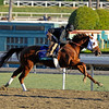 Caption: Groupie Doll<br /> Breeders' Cup morning works at Santa Anita near Arcadia, California, on Oct. 29, 2012.<br /> BCRACES2012 WorksMonday1 image323<br /> Photo by Anne M. Eberhardt
