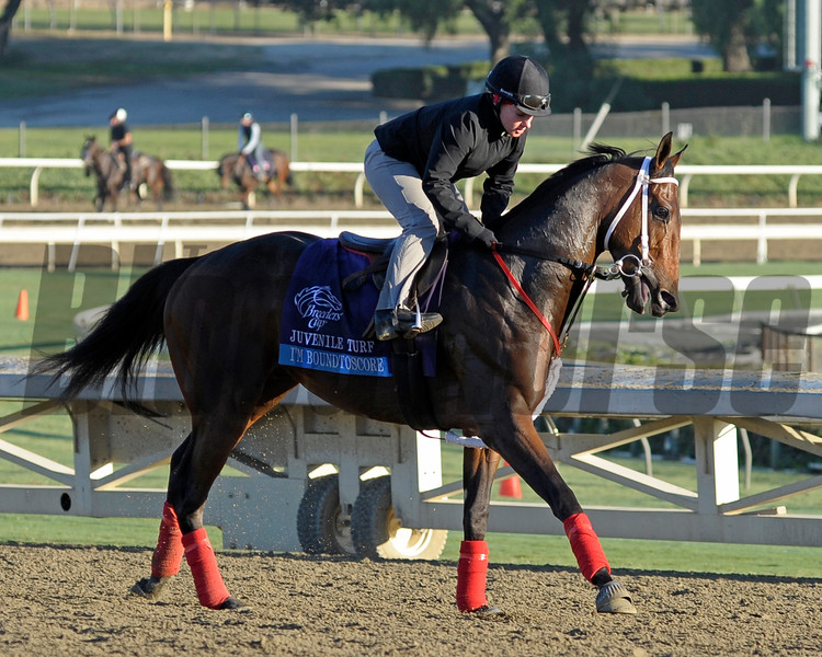 Caption: I'm Boundtoscore<br /> Breeders' Cup morning works at Santa Anita near Arcadia, California, on Oct. 30, 2012.<br /> BCRACES2012 WorksTues2 image158<br /> Photo by Anne M. Eberhardt