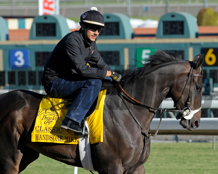 Caption: Handsome Mike<br /> Breeders' Cup morning works at Santa Anita near Arcadia, California, on Oct. 28, 2012.<br /> BCRACES2012 WorksSunday2 image938<br /> Photo by Anne M. Eberhardt