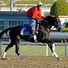 Caption: Great Hot<br /> Breeders' Cup morning works at Santa Anita near Arcadia, California, on Oct. 29, 2012.<br /> BCRACES2012 WorksMonday1 image215<br /> Photo by Anne M. Eberhardt