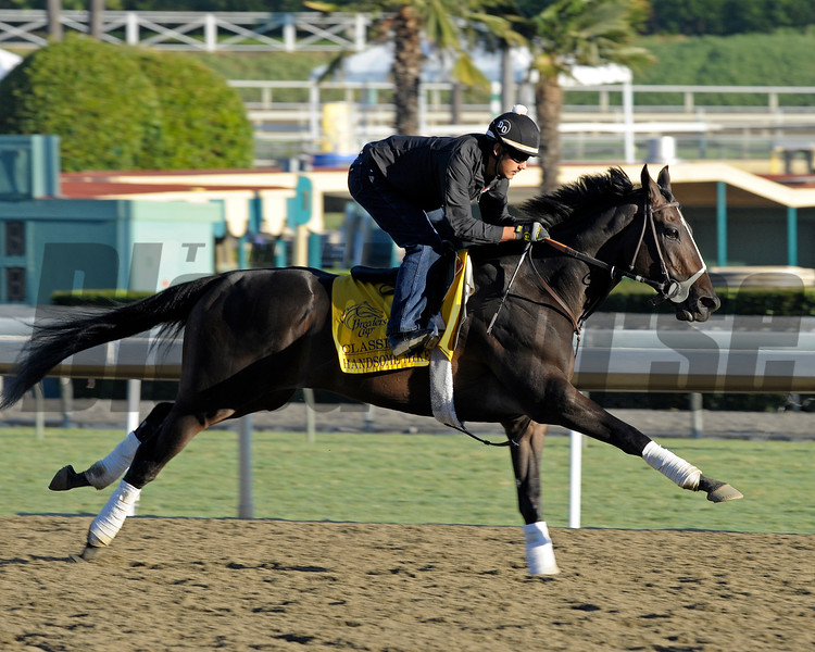 Caption: Handsome Mike<br /> Breeders' Cup morning works at Santa Anita near Arcadia, California, on Oct. 29, 2012.<br /> BCRACES2012 WorksMonday1 image464<br /> Photo by Anne M. Eberhardt