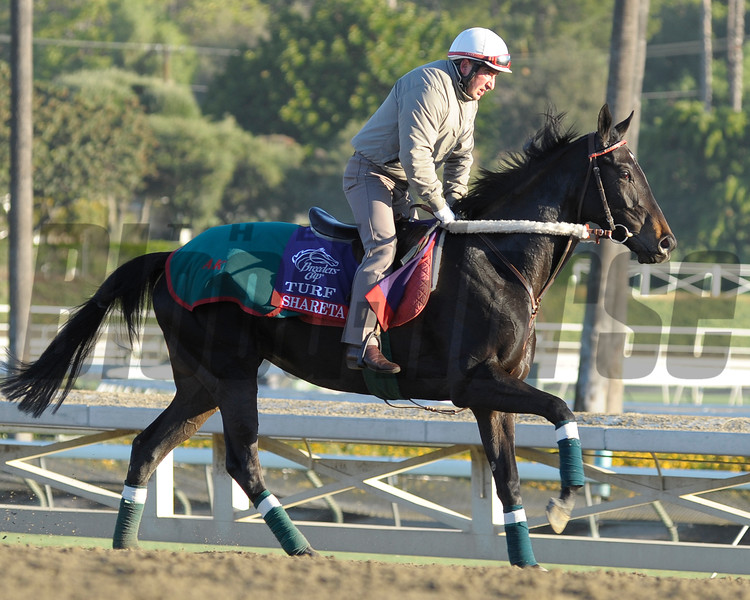 Caption: Shareta<br /> Breeders' Cup morning works at Santa Anita near Arcadia, California, on Oct. 30, 2012.<br /> BCRACES2012 WorksTues2 image131<br /> Photo by Anne M. Eberhardt