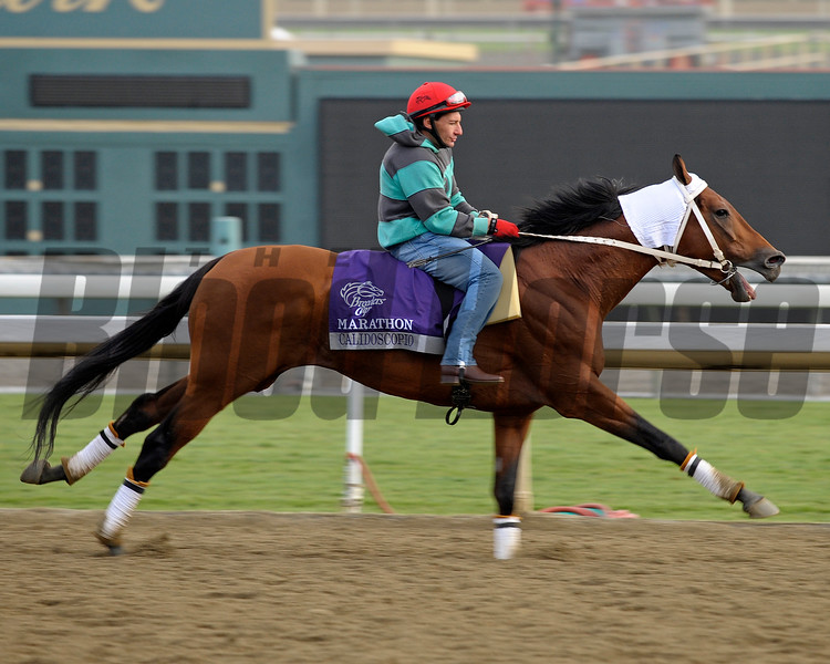 Caption: Calidoscopio<br /> Breeders' Cup morning works at Santa Anita near Arcadia, California, on Oct. 31, 2012.<br /> BCRACES2012 WorksThurs2 image226<br /> Photo by Anne M. Eberhardt