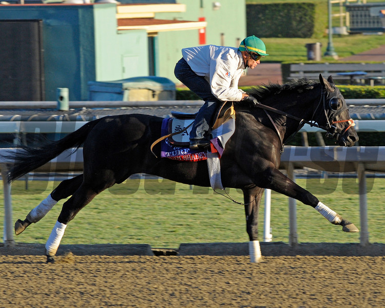 Caption: Slim Shadey, Turf<br /> Breeders' Cup morning works at Santa Anita near Arcadia, California, on Oct. 28, 2012.<br /> BCRACES2012 WorksSunday2 image640<br /> Photo by Anne M. Eberhardt