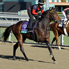 Caption: Sweet Shirley Mae<br /> Breeders' Cup morning works at Santa Anita near Arcadia, California, on Oct. 29, 2012.<br /> BCRACES2012 WorksMonday1 image515<br /> Photo by Anne M. Eberhardt